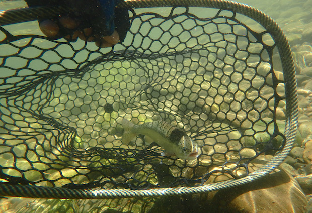 Fishpond Emerger Net-2
