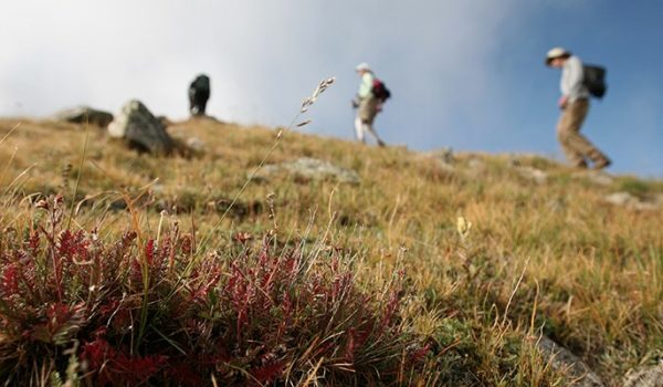 Hiking & Camping