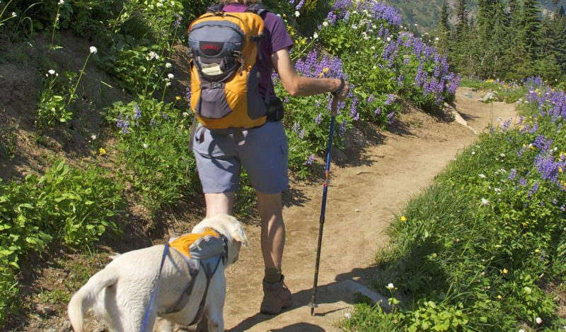 The Perfect Kit: Day Hiking