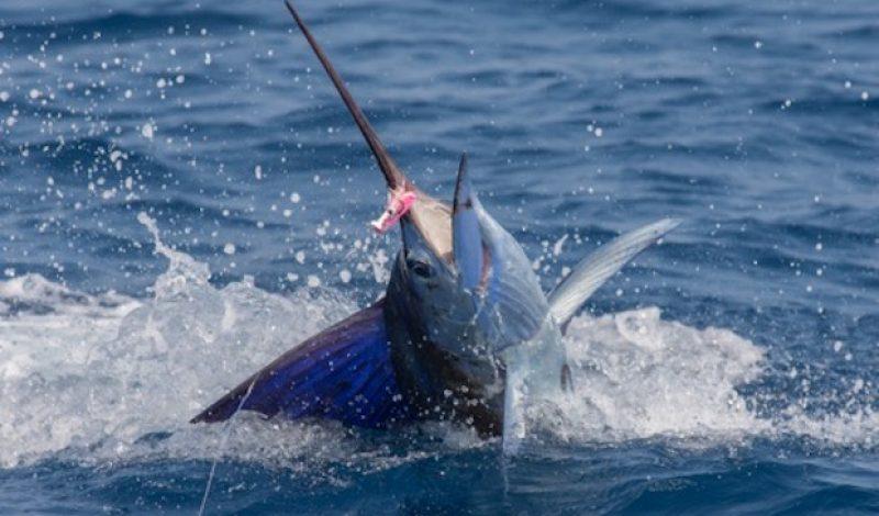Pack Like A Pro: Professional Fishing Guide Sarah Gardner