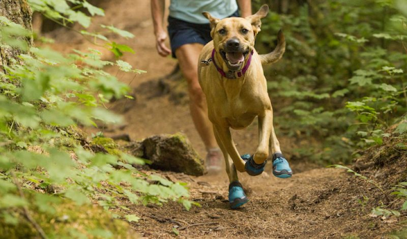 5e20383fa53 Get Your Pup Ready For Spring Adventures With Gear Designed For Dogs ...