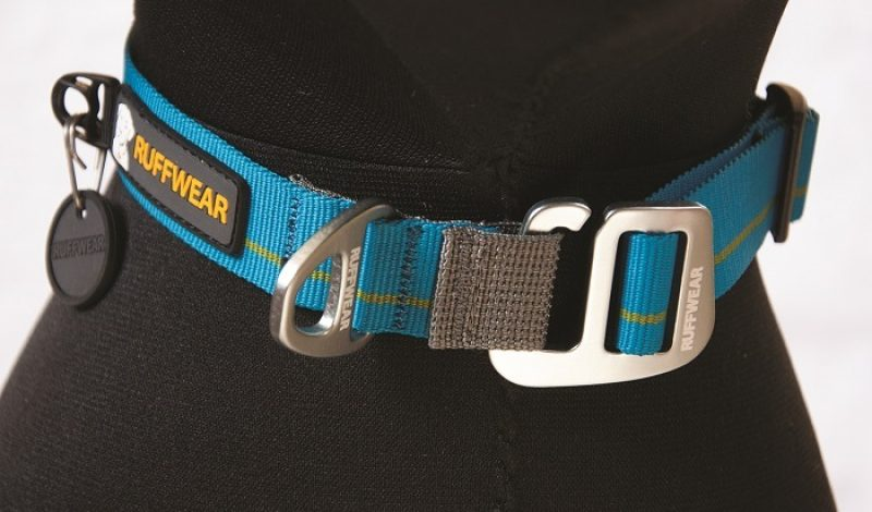 The Evolution of the Dog Collar