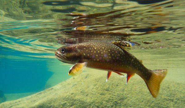 Tenkara: The Simple Art of Angling