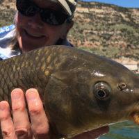 Sleek net helps put big fish in your boat
