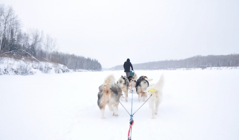 The Outdoor Gear Used  to Survive a Brutal Dog Sled Marathon