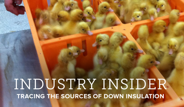 The Ethics of Down: Tracing the Sources of Insulation