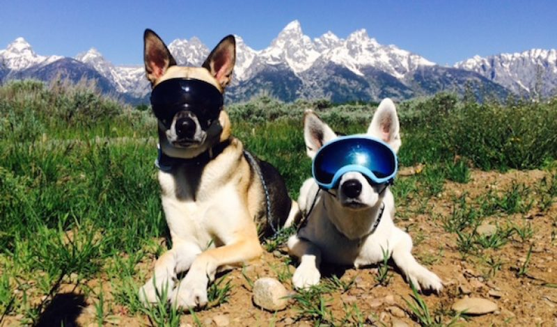 Rex Specs: The Latest in Fashion Sunglasses – For Your Dog