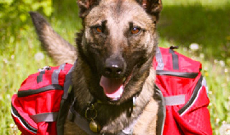 Feeding Working Dogs on the Road and in The Backcountry