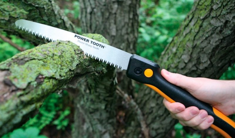 The Trail Saw: The Most Useful Tool You Forget To Bring With You