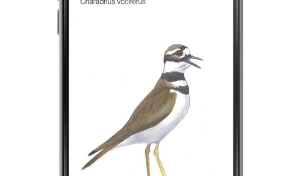 Birding Goes High Tech with Song Based App